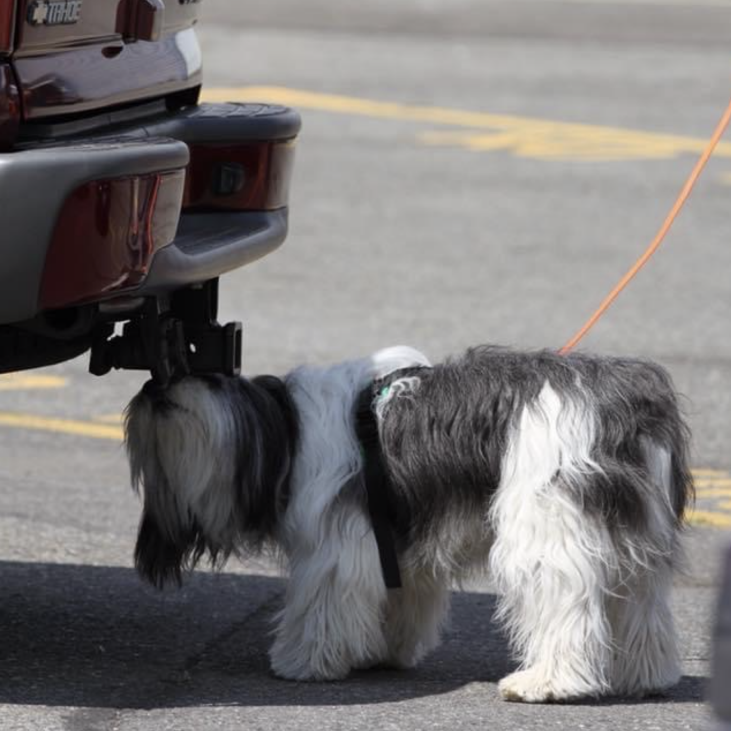 Canine Nosework